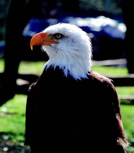 Adler zoo bird of prey, animals.