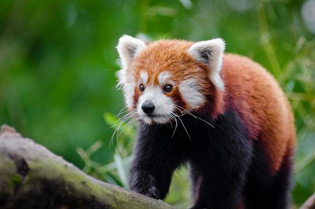 Adorable animal animal photography, animals.