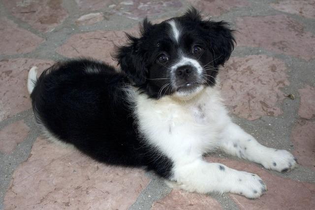 Adorable puppy baby, animals.