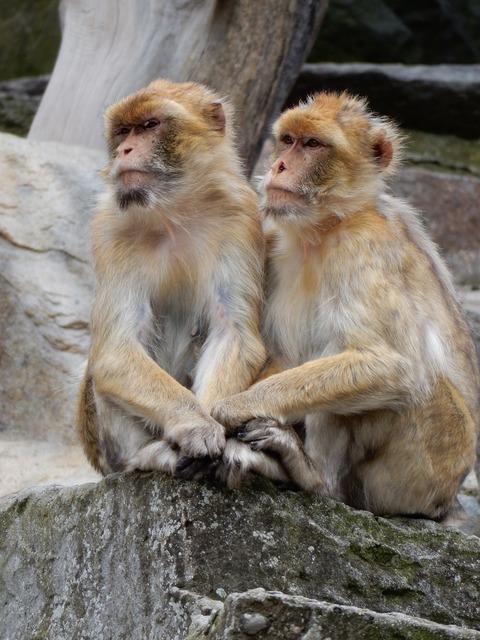 Äffchen monkey zoo, animals.
