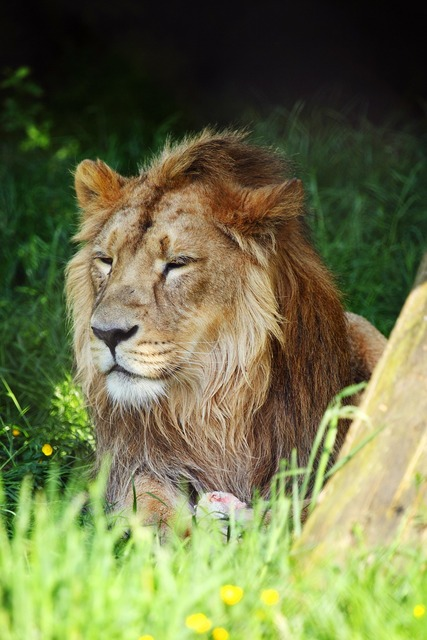Africa african animal, animals.