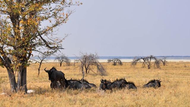 Africa namibia nature, nature landscapes.