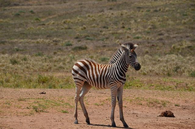 Africa safari wild animal, animals.
