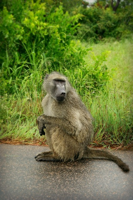 Africa south africa wild life, animals.