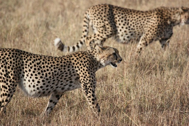 Africa south africa wild, nature landscapes.