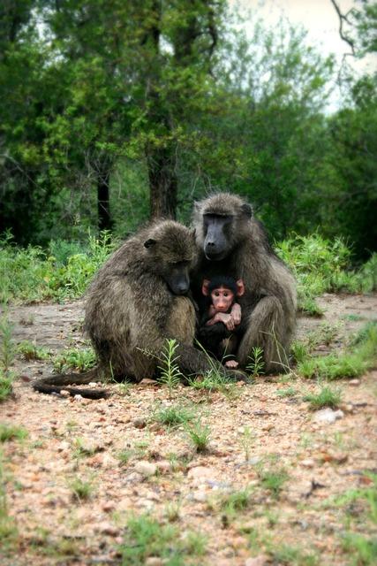 Africa south africa wildlife.