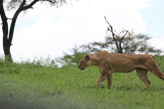 Africa tanzania tarangire, nature landscapes.