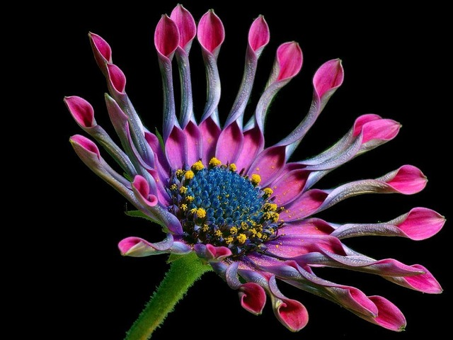 African daisy flower nature, nature landscapes.