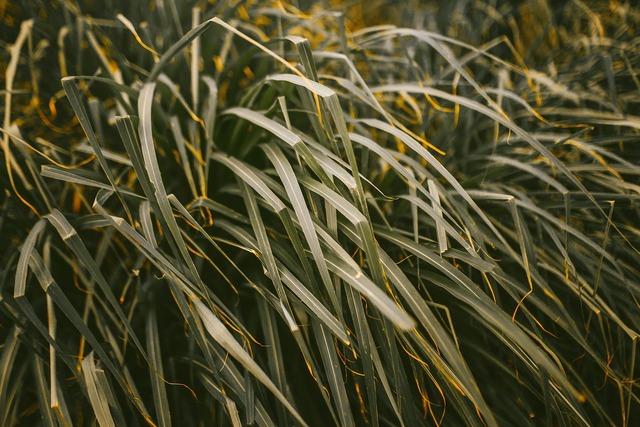 Agriculture blades blur.