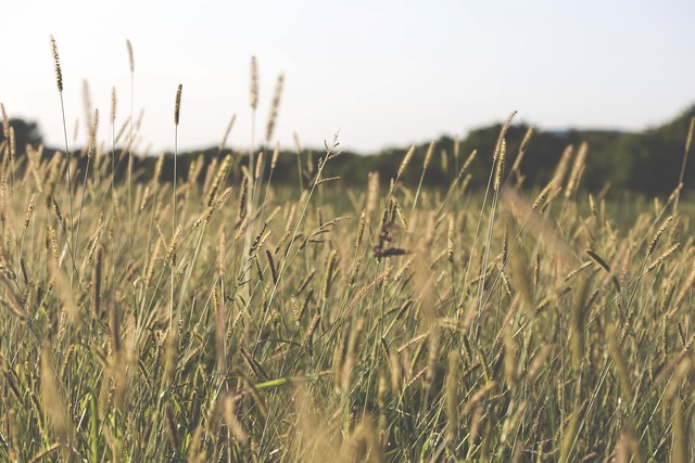 Agriculture blur close-up.
