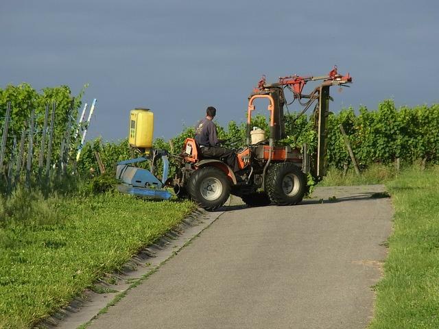 Agriculture wine vineyard, food drink.