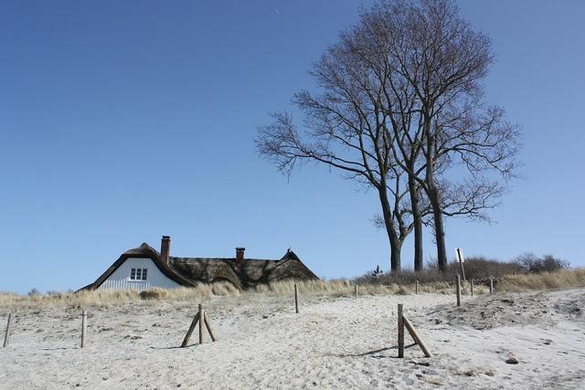 Ahrenshoop windfluechter beach, travel vacation.