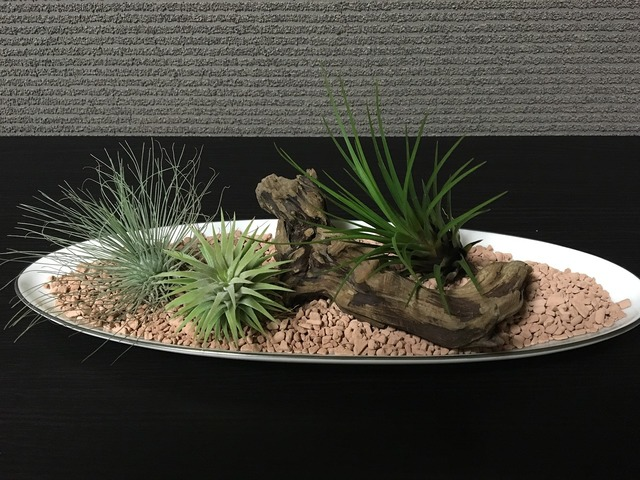 Air plants foliage plant room.