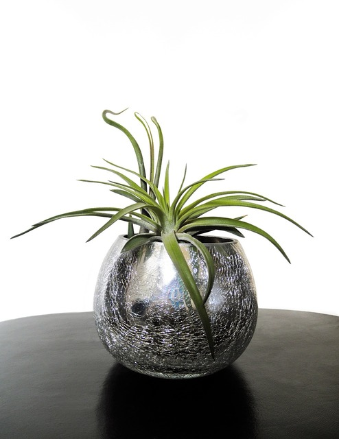 Air plants tillandsia plant, nature landscapes.