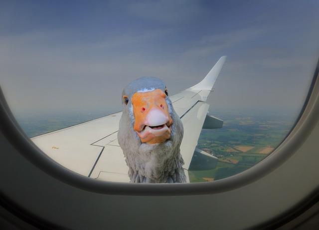 Aircraft duck window.