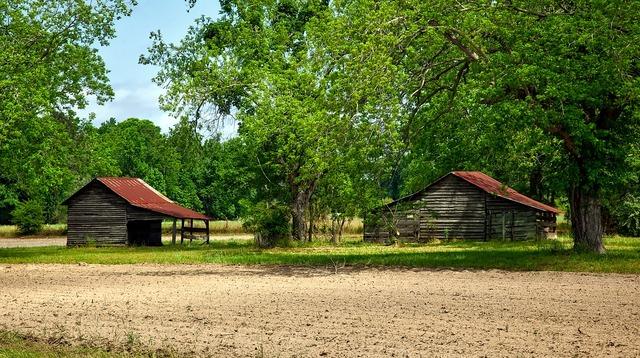 Alabama landscape forest, nature landscapes.