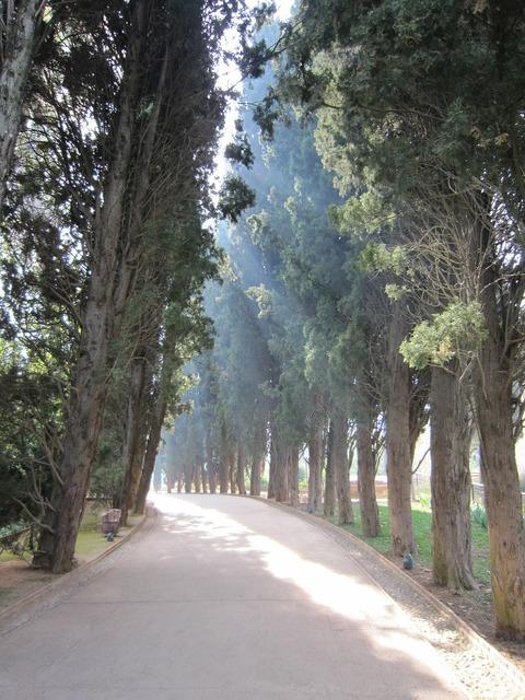 Alhambra trees avenue.