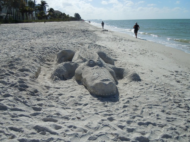 Alligator beach sand sculpture, travel vacation.
