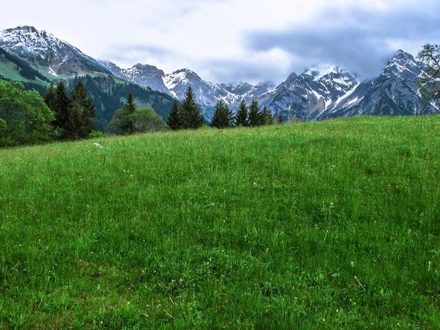 Alpine flower meadow mountains.