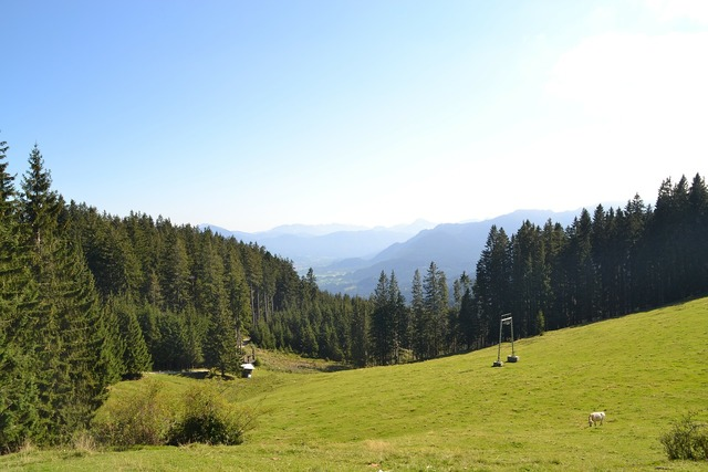 Alpine mountains meadow.