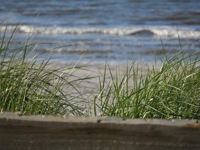 Ameland beach north sea, travel vacation.