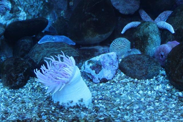 Anemone sea sea animal.