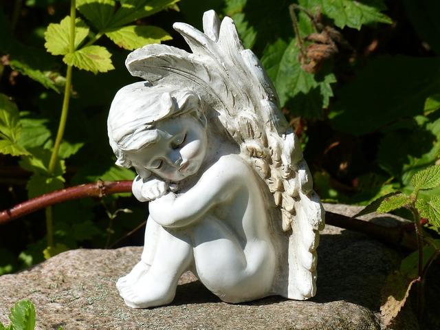 Angel wings garden.