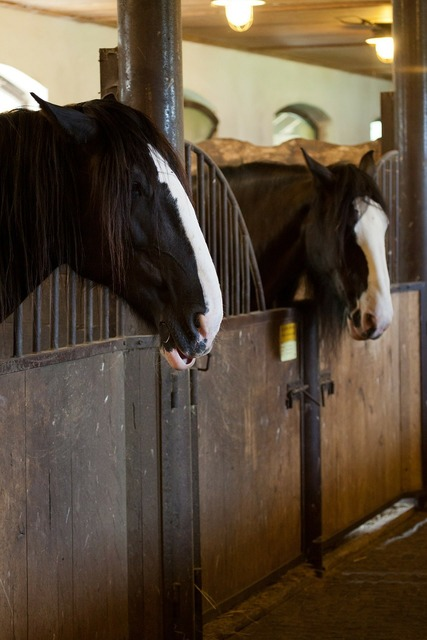 Animal animals barn, animals.