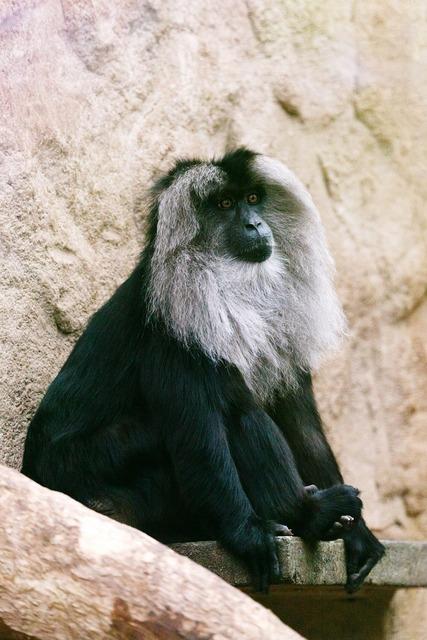 Animal ape black, animals.