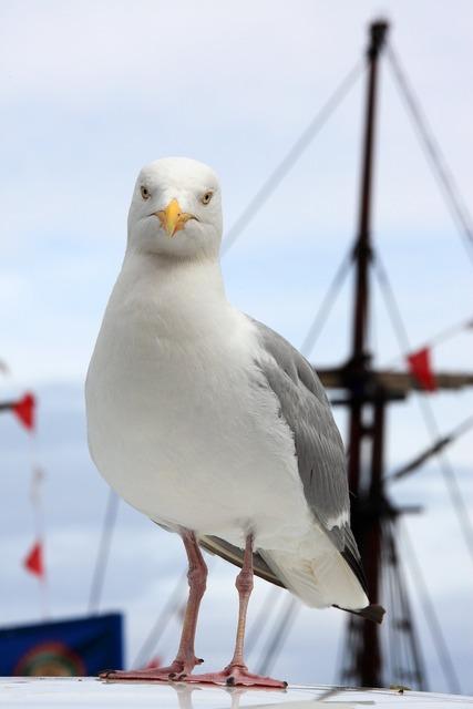 Animal beak bird, animals.