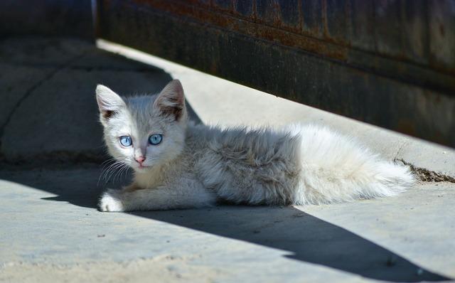 Animal cat cute, animals.