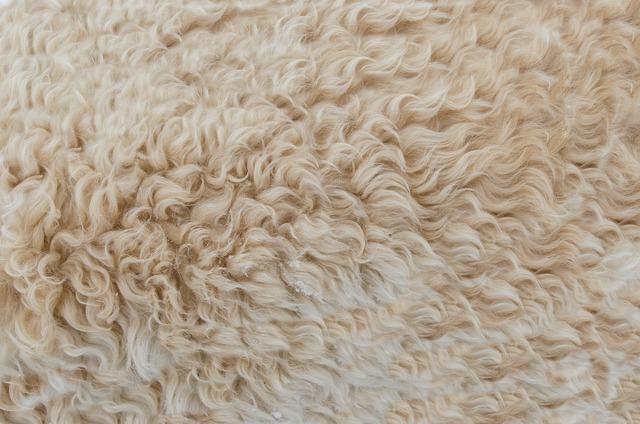 Animal dog fur, animals.