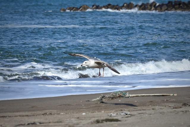 Animal sea beach, animals.