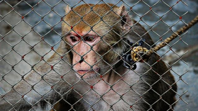 Animal welfare cruelty to animals help.