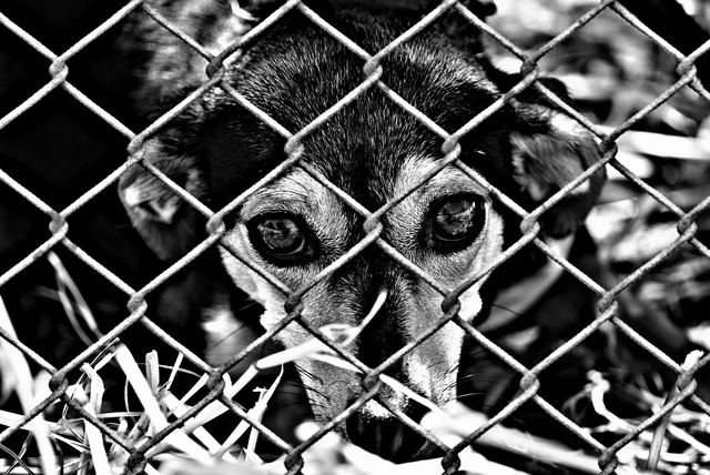 Animal welfare dog imprisoned, animals.