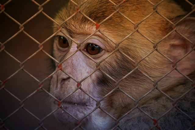 Animal welfare help imprisoned.
