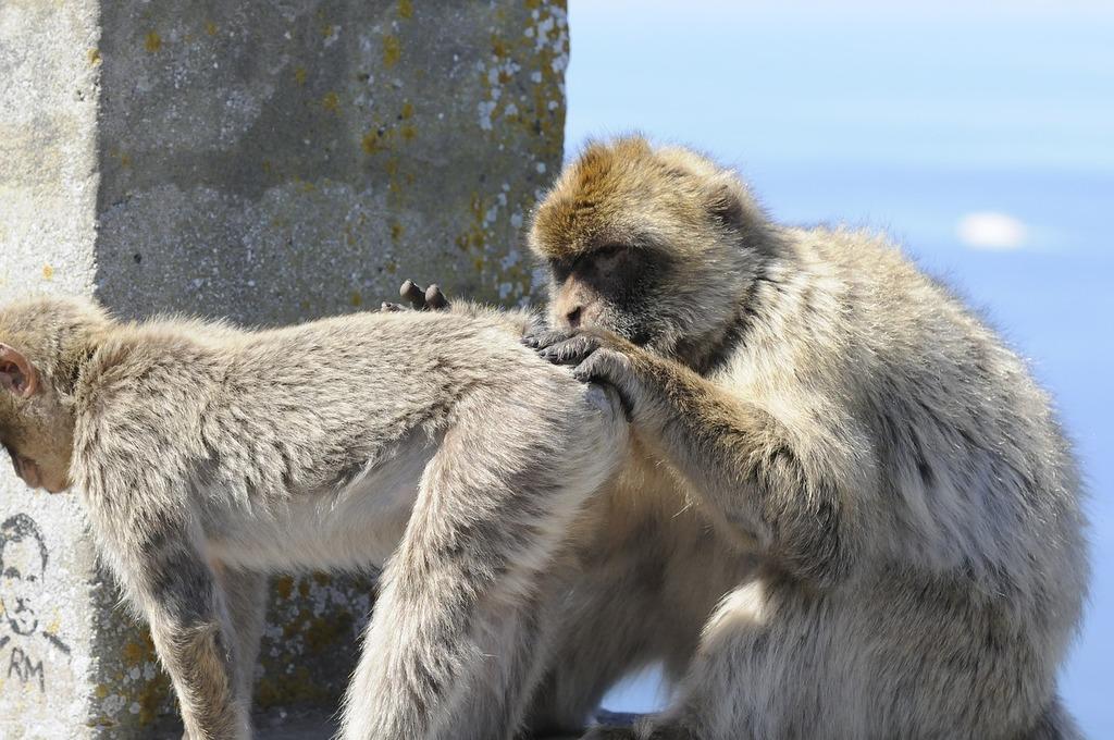 Animals ape nature, nature landscapes.