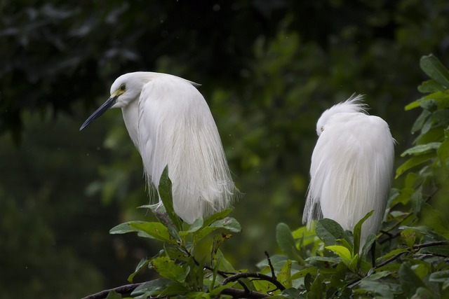 Animals avian beak, nature landscapes.