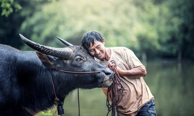 Animals men's agriculture, food drink.