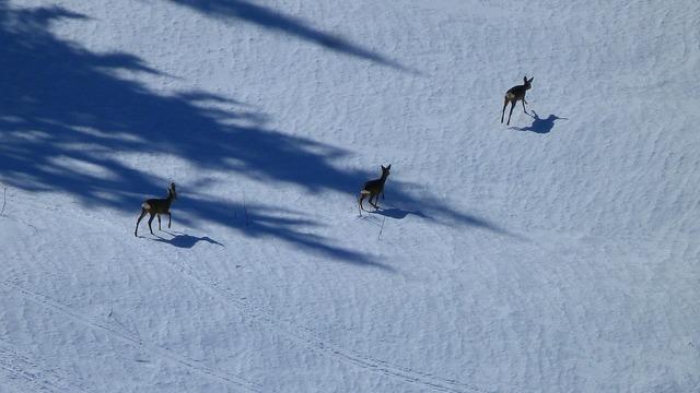 Animals nature deer, nature landscapes.