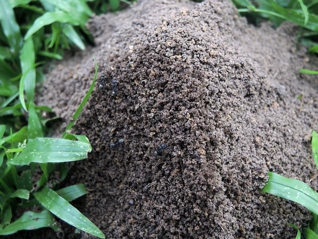 Ant hill field, animals.
