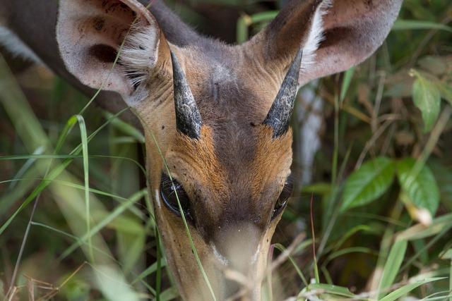Antelope africa national park, nature landscapes.