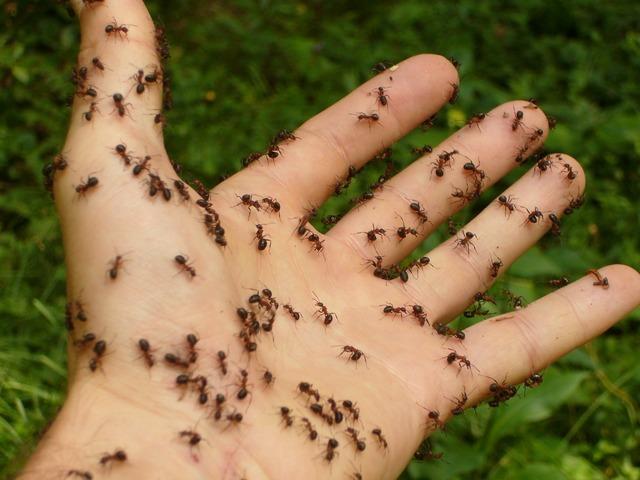 Ants wood ants hand, emotions.