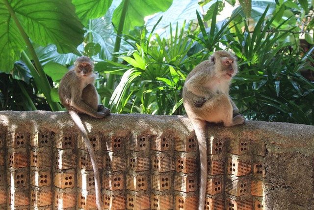 Ape thailand nature, nature landscapes.
