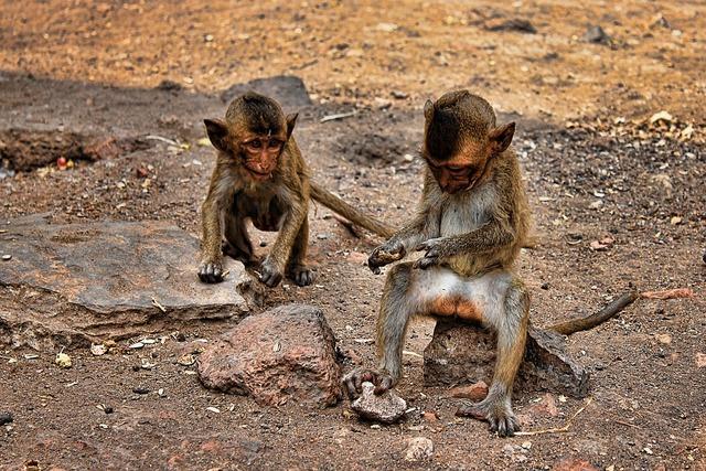 Ape thailand young monkeys, nature landscapes.
