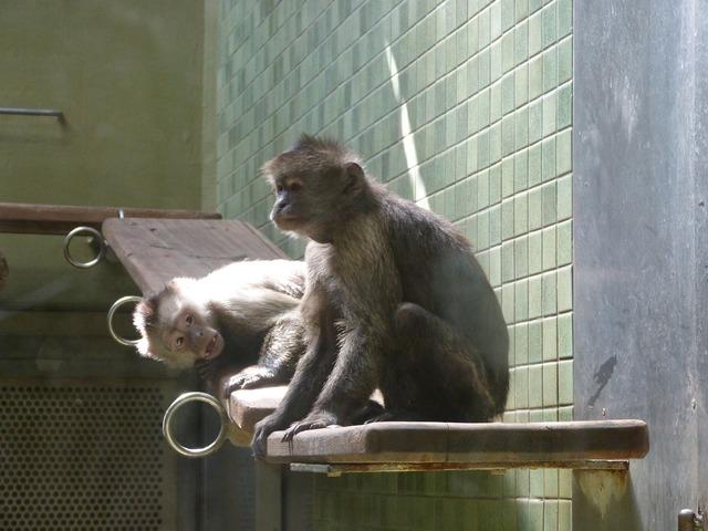 Ape zoo äffchen, nature landscapes.