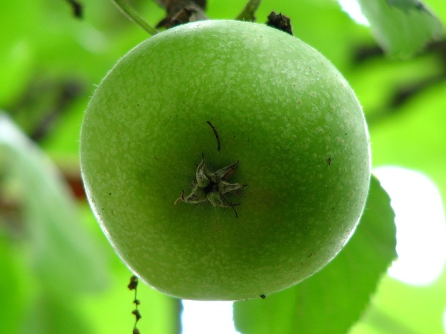 Apple immature green, food drink.