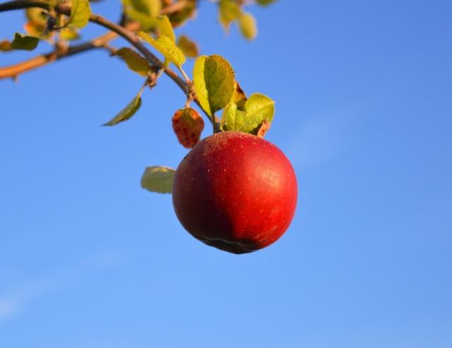Apple red red apple, food drink.
