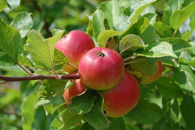 Apples fruit fruit trees, food drink.