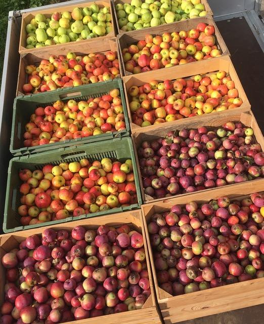 Apples harvest red apples, food drink.